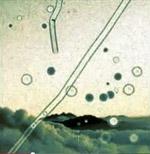 """Das Coverbild des Liedes """"Muscae Volitatantes"""" ist eine Adaption eines Bildes des Leuchtstruktur-Verlages."""