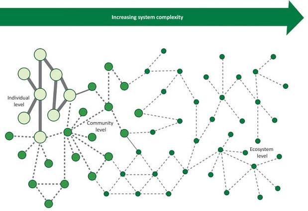 Die wechselseitigen ökologischen Beziehungen auf der Ebene des Individuums, der Population und des Ökosystems.