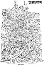 Die Nadis im und um den menschlichen Körper.